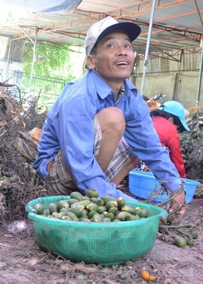 Lao động làm ở lò chế biến thành cau khô cũng được giá nhân công theo giá cau.