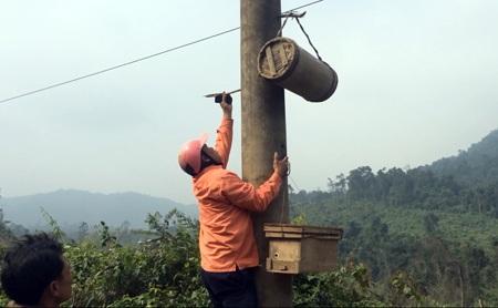 Thợ săn Trần Ngời cẩn thận treo chang lên cột điện