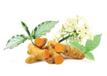 Nghệ, ngưu tất, hoa hòe là những thảo được thiên nhiên dễ tìm có tác dụng hạ mỡ máu