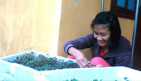 Một cô giáo đang chăm sóc rau xanh