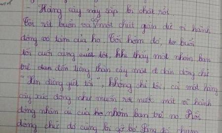 Những dòng tâm sự của học trò lớp 4 về việc chặt cây xanh