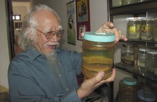 Tiến sĩ Nguyễn Thái Tự có gần 200 tiêu bản các loài cá, nhiều loài mới được thế giới công nhận