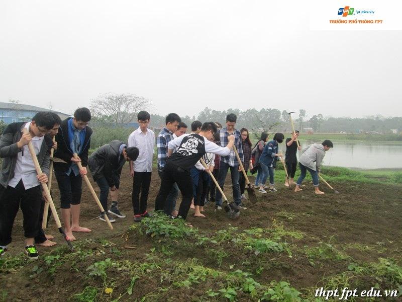 Học sinh THPT FPT với dự án trồng rau sạch ngay tại khuôn viên trường