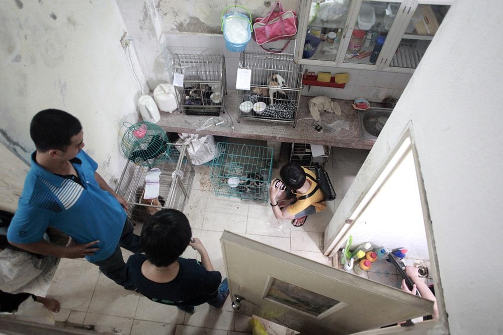 Đến nay biệt đội cứu hộ chó mèo này có rất đông tình nguyện viên, rải rác khắp Hà Nội