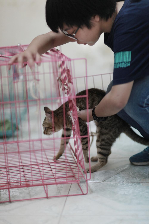 Những chiếc lồng nhỏ chính là nhà mới của chú mèo này
