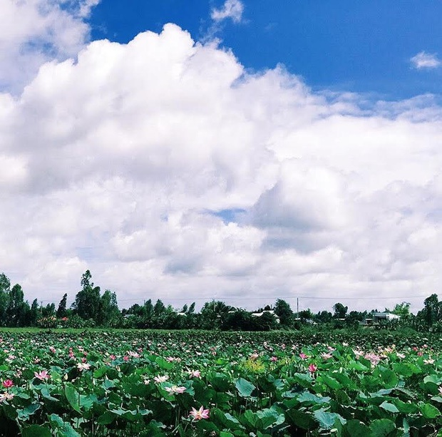 Bạn sẽ tha hồ ngỡ ngàng với cánh đồng sen bát ngát và những cánh chim trời rợn ngợp. (Ảnh: _94.hg)