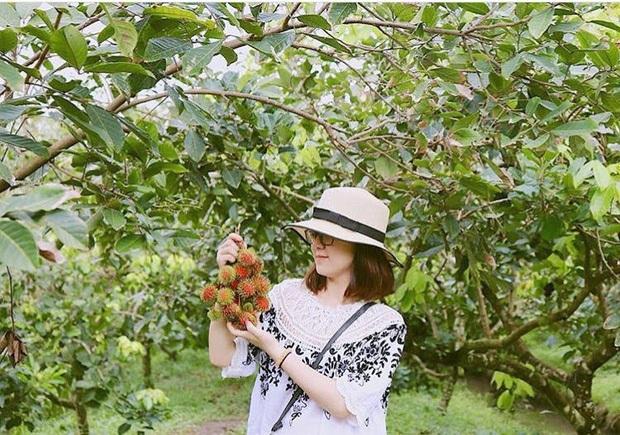 Du khách sẽ tha hồ thưởng thức trái cây tại vườn. (Ảnh: hoebeo_)