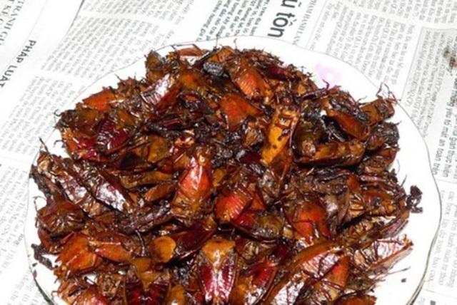 Trong quan niệm của người dân Sơn La, bọ xít rừng có thể chữa được nhiều bệnh.