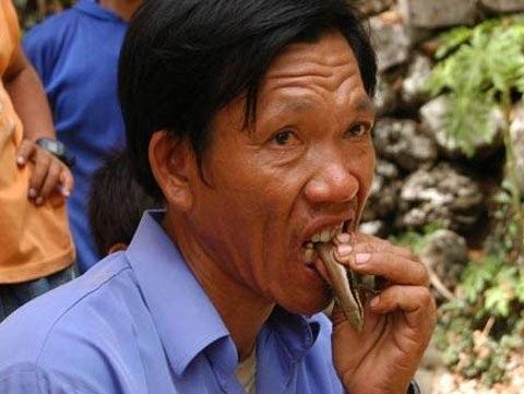 Ngoài rắn độc, ông Tùy còn chén các loại côn trùng khác như cóc, ếch, rắn mối. (Ảnh: vietnamnet)