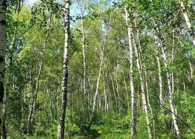 Khách sạn hầm mộ nằm sâu trong một khu rừng rậm rạp ở Thụy Điển