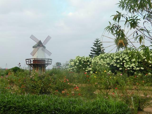 Vườn hoa bãi đá sông Hồng có nhiều bối cảnh cho bạn lựa chọn. (Ảnh: H.N)