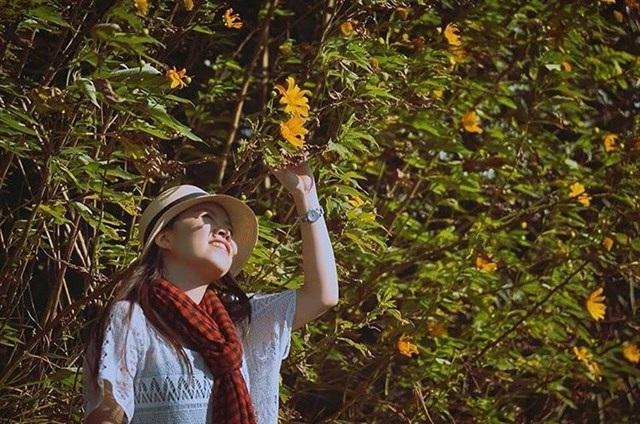 Cứ vào tháng 11, người ta lại nô nức rủ nhau lên Đà Lạt để ngắm nhìn hoa dã quỳ. (Ảnh: theresedaisy)