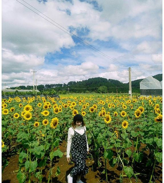 Hàng ngàn bông hoa kiêu hãnh hướng về phía ánh dương rực rỡ. (Ảnh: thanhhien0404)