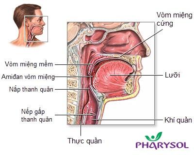 TPCN Pharysol – Bảo vệ họng cho cả gia đình - 1