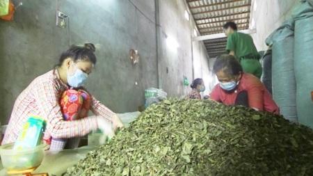 Cơ sở bị công an phát hiện nguyên liệu trà không rõ nguồn gốc. (Ảnh: CTV)