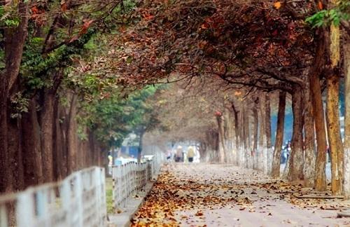 Những con đường lá vàng bay bay là địa điểm chụp ảnh dã ngoại ở Hà Nội lý tưởng