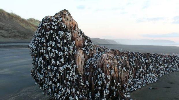 Người dân ngỡ ngàng trước vật to lớn kỳ dị trên bờ biển