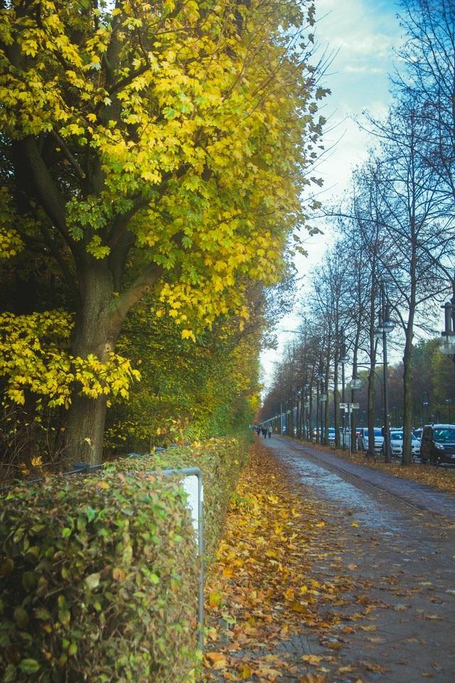 Mùa thu Berlin như một bức tranh sơn dầu đẹp và mênh mang đến lạ.