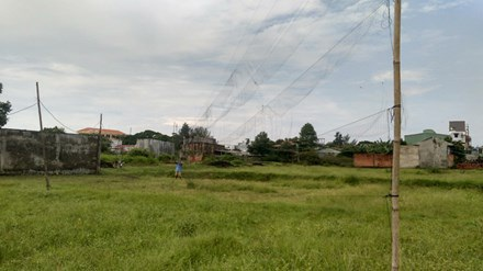 Chiếc bẫy chim bằng lưới trên cánh đồng sau mùa gặt.