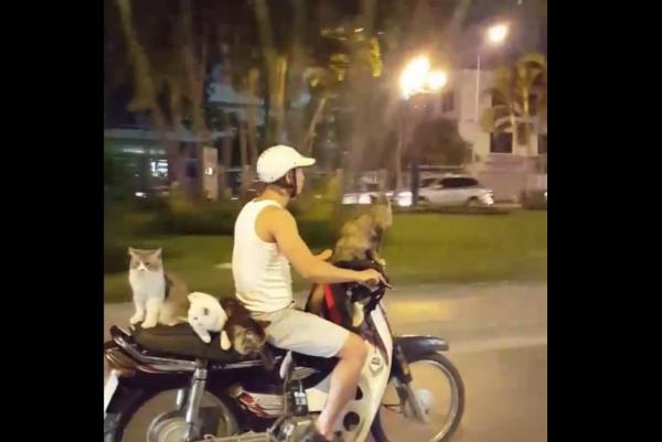 Hình ảnh xấu xí thậm chí nguy hiểm khi tham gia giao thông nhưng không phải quá xa lạ trong mắt người Việt được đánh giá là hiện tượng lạ đối với bạn bè quốc tế.