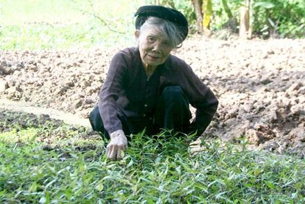 """Xã Chuyên Ngoại (Duy Tiên, Hà Nam) - được gọi là xã """"trường thọ"""", không ít cụ trên 80 tuổi nhưng vẫn tham gia thi đấu giải bóng chuyền của xã. Đặc biệt, cụ bà Nguyễn Thị Loan, ở xóm Thị Nội năm nay 90 tuổi vẫn cuốc đất trồng rau (Theo báo Lao Động)"""