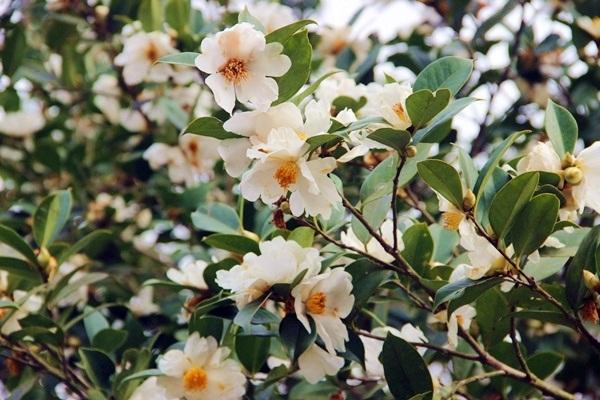 Rực rỡ sắc hoa mùa cuối năm - 6