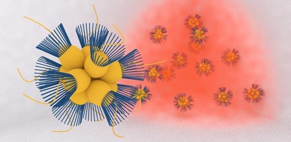 Sinh vật đơn bào di chuyển về phía môi trường có oxy như thế nào? - 1