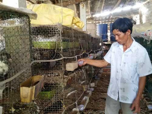 Mô hình nuôi bồ câu Pháp của ông Lương đạt hiệu quả kinh tế cao. Ảnh: K.O