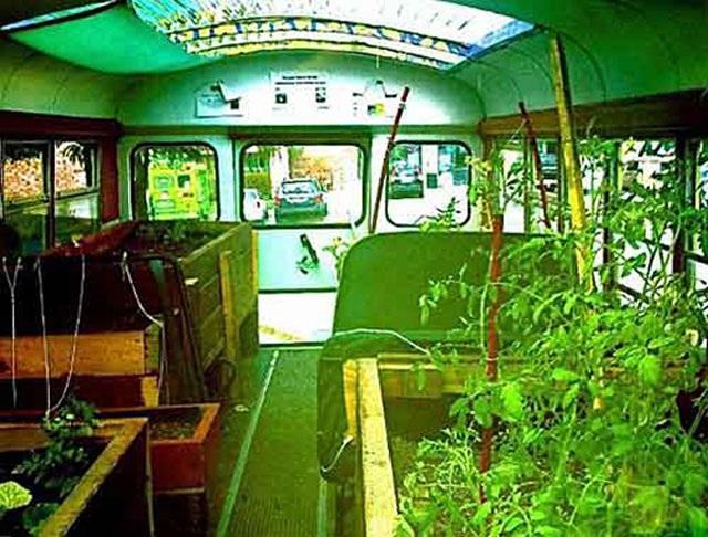 Lạ lùng trồng rau trong… xe buýt - 1