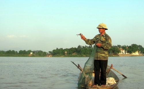 Ông Trần Hữu Tưởng, thôn Bến, xã Đồng Việt (Yên Dũng) kéo lưới bắt cua da.