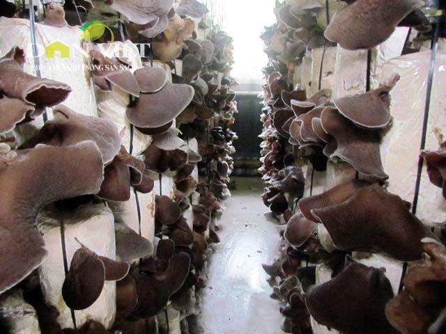 Năm 2013, sản phẩm nấm đã được đưa vào danh mục sản phẩm chủ lực có hỗ trợ của tỉnh Hà Tĩnh