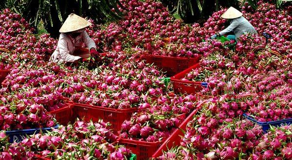Chi phí losgistics ở Việt Nam quá cao là nguyên nhân làm cho nông sản Việt kém cạnh tranh trên thị trường xuất khẩu.