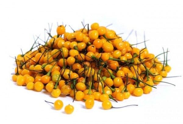 Chiêm ngưỡng loại ớt đắt nhất thế giới với giá nửa tỷ một kg - 1