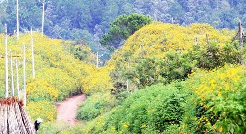 Hoa nở khắp núi đồi