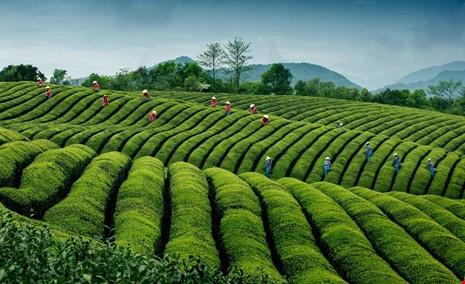 Việt Nam lọt top ảnh đẹp du lịch thế giới - 2