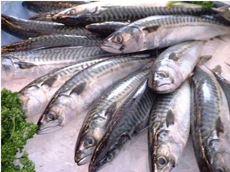 Những lưu ý khi bảo quản và sử dụng cá - 1