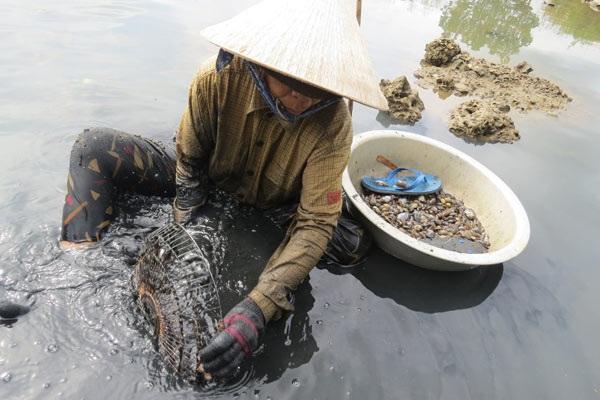 Bà Nguyễn Thị Nhung (70 tuổi), ở xã Xuân Thọ 2 (TX Sông Cầu), than vãn: Ngày nào cũng ráng đi cào kiếm tiền, chân tay tê cứng. Tối qua tôi bị cảm lạnh đi mua liều thuốc về uống, sáng nay đi cào tiếp. Ảnh: Mạnh Hoài Nam