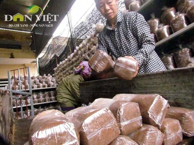 Trần Trung Văn ở xã Xuân Liên trồng nấm thu nhập cao nhờ Tết