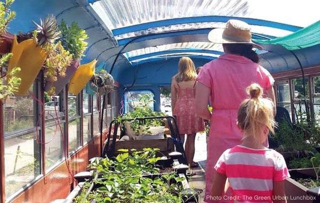 Lạ lùng trồng rau trong… xe buýt - 7