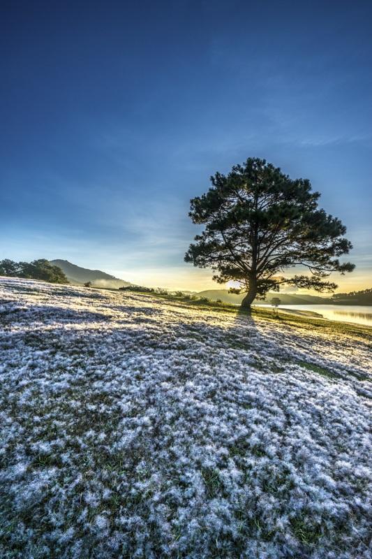 Đến Đà Lạt khám phá đồi cỏ Tuyết tuyệt đẹp - 17