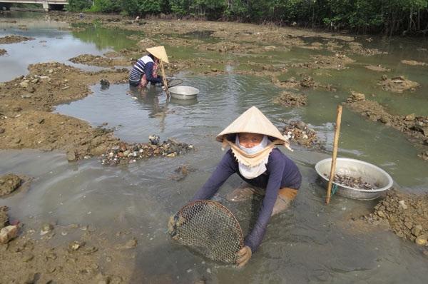 Chị Nguyễn Thị Liên (55 tuổi), cũng ở xã Xuân Thọ 2 (TX Sông Cầu),đang cào dắt, chia sẻ: Nghề này ngâm dưới bùn cả ngày về đến nhà tay chân rã rời. Ảnh: Mạnh Hoài Nam