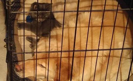 Hai người từng cùng nhau nhận nuôi một chú chó tên Shamus