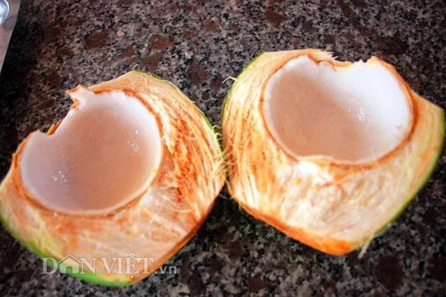 """""""Quá đã"""" vườn dừa xiêm lùn siêu ngọt trĩu trái nằm sát biển - 10"""