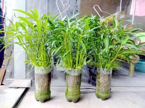Các lọ rau có thể đặt khắp mọi nơi, từ hành lang, sân thượng đến tận dụng các bức tường, nhà bếp