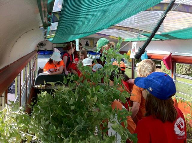 Lạ lùng trồng rau trong… xe buýt - 4