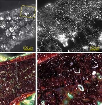 Các hình ảnh so sánh độ phát sáng được chụp dưới kính hiển vi. Khu vực trong bức ảnh tương ứng với một phần nan hoa của tấm bùa.