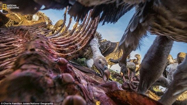 Lộ diện những bức ảnh đẹp nhất cuộc thi ảnh National Geographic 2016 - 3