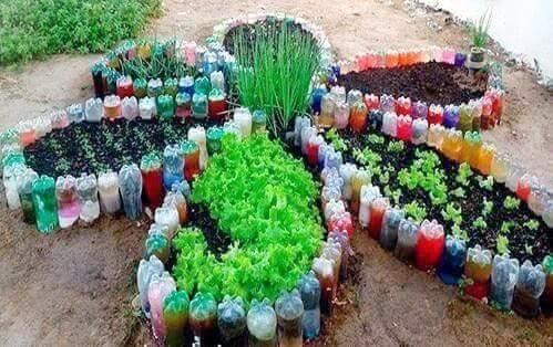 Nhiều gia đình còn thiết kế tạo dáng để vườn rau trông đẹp mắt