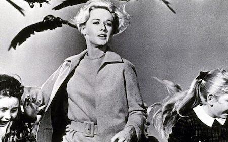 """""""The bird"""" (1963) kể về một đàn chim dữ, hung thủ gây ra những vụ tấn công kinh hoàng cho cả một thị trấn. Có cốt truyện tương đối đơn giản nhưng """"The bird"""" lại là một trong những tác phẩm ấn tượng nhất và """"hút khách"""" nhất của đạo diễn nổi tiếng Alfred Hitchcock."""