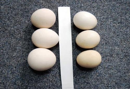 Bí quyết chọn trứng tươi ngon không phải ai cũng biết - 4
